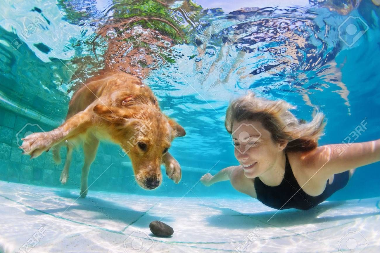 Smiley Woman Playing With Fun And Training Golden Retriever Puppy