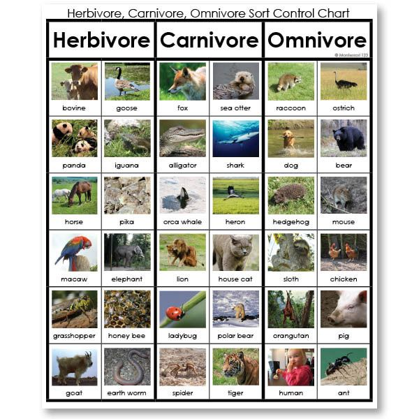What are some characteristics of herbivores?