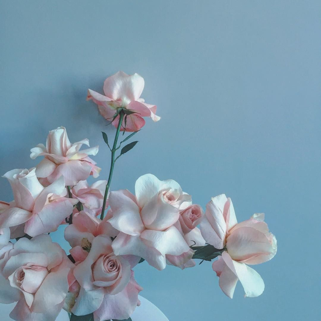Regardez Cette Photo Instagram De Brrch Floral 210 Mentions J Aime Pastel Aesthetic Blue