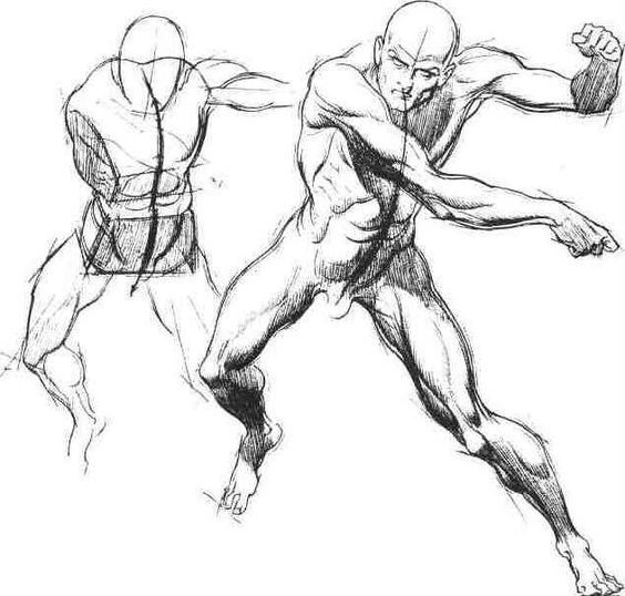 Enjoy a collection of references for Character Design: Male Anatomy ...