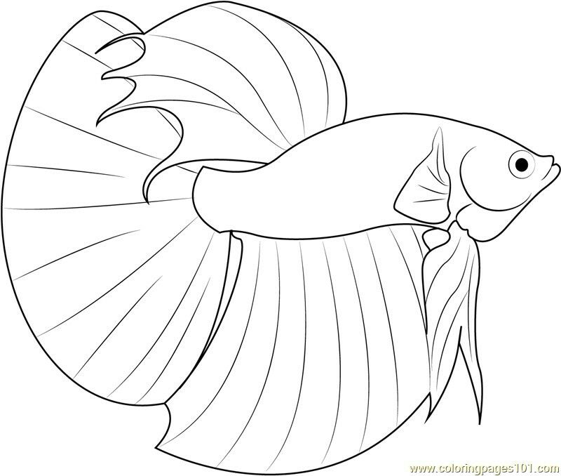 Christmas Fish Coloring Pages Concept