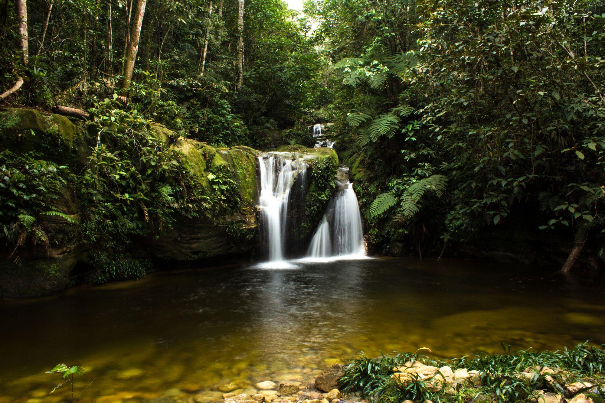 virtual rainforest tour