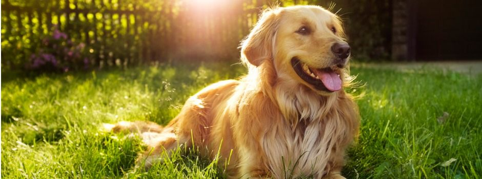 Here S What To Do When Your Whole House Smells Like Dog Urine