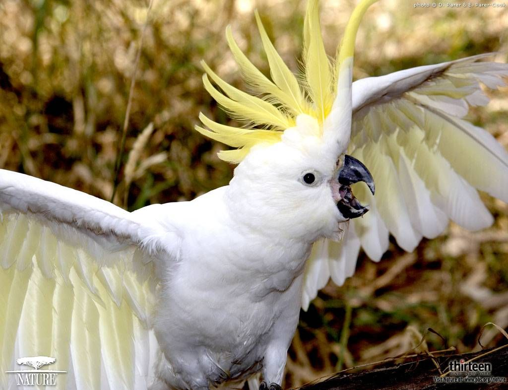 White Parrot Parrot Beautiful Birds Parrot Wallpaper
