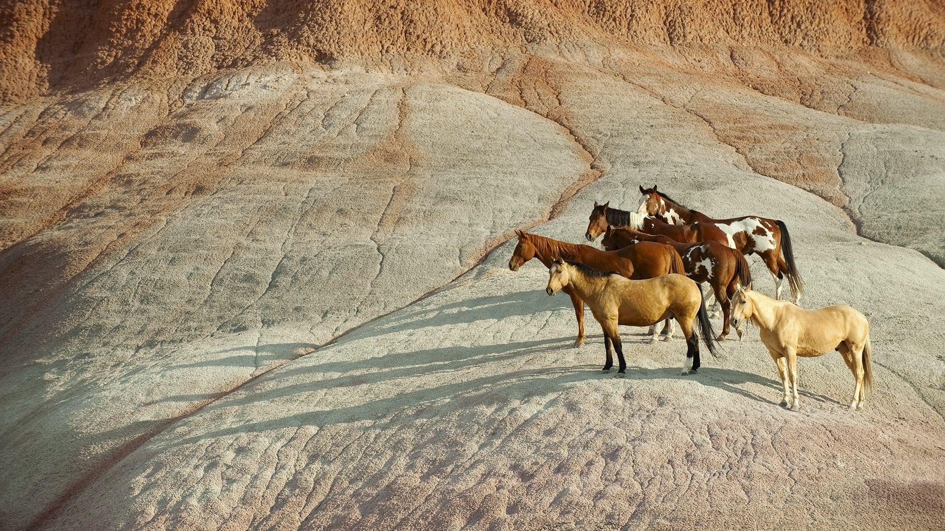 Beautiful Wallpaper Horse Sunrise - 118463d61c69d44fffec4e8053eebfcd  Pic_834065.jpg