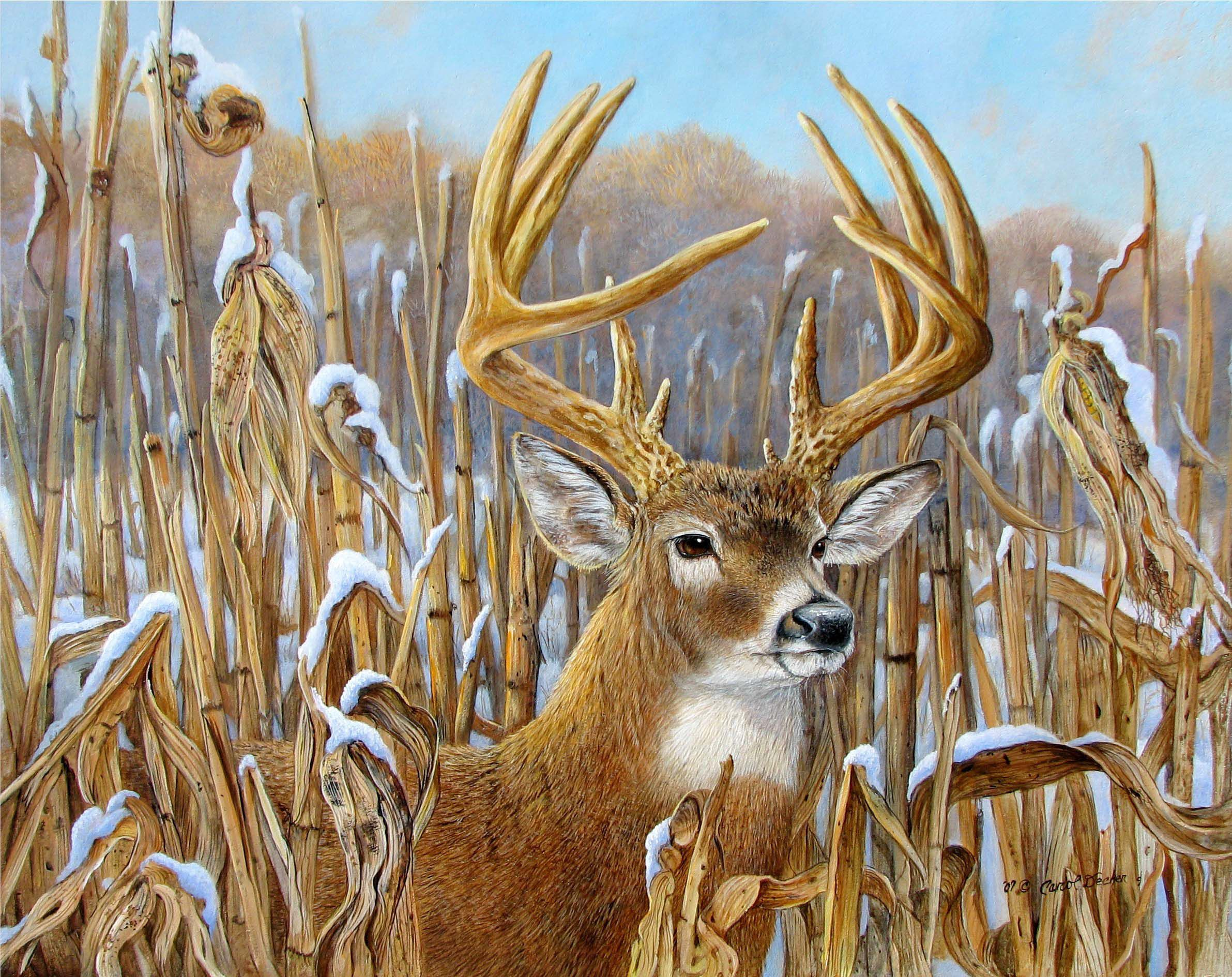 wildlife artists prints Home Gallery Artist Paintings