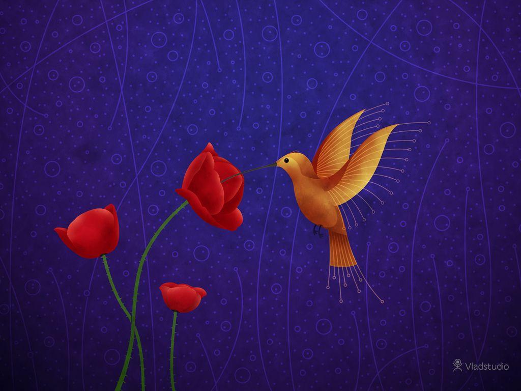 Hummingbird Desktop Wallpapers Vladstudio