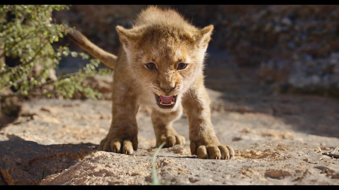 Download The Lion King 2019 Full Movie 123movies Lion King Pictures Lion King Movie Lion King Story