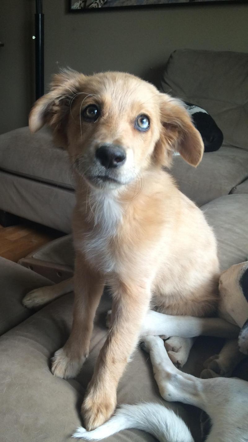 Pet adoption in northeast ohio