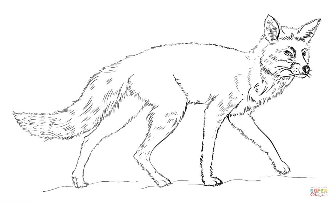 Realistic Red Fox Coloring Page Free Printable Coloring Pages Fox Coloring Page Coloring Pages Lion Coloring Pages