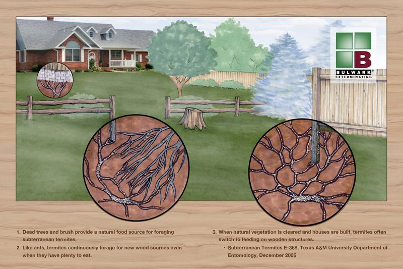 Homeowners insurance doesnt cover termite damage