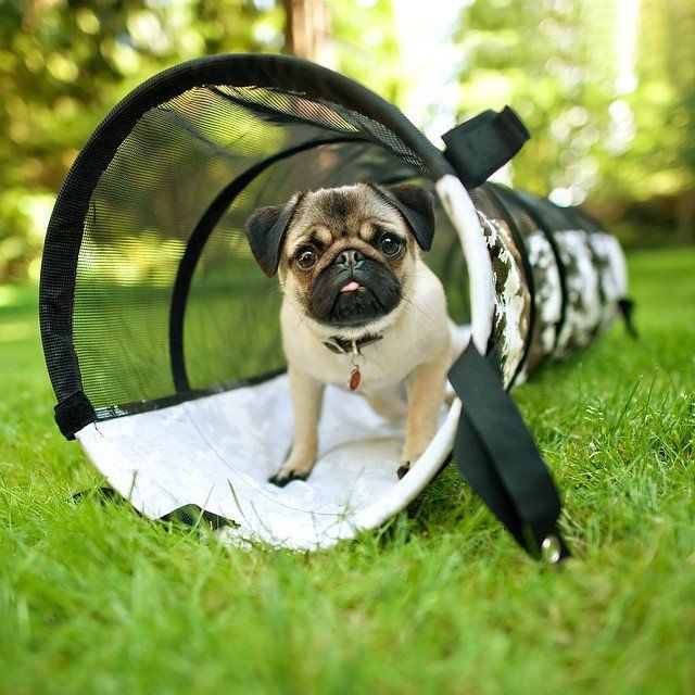 Pet Play Tunnel by P.L.A.Y. Pugs, Dogs, Summer dog