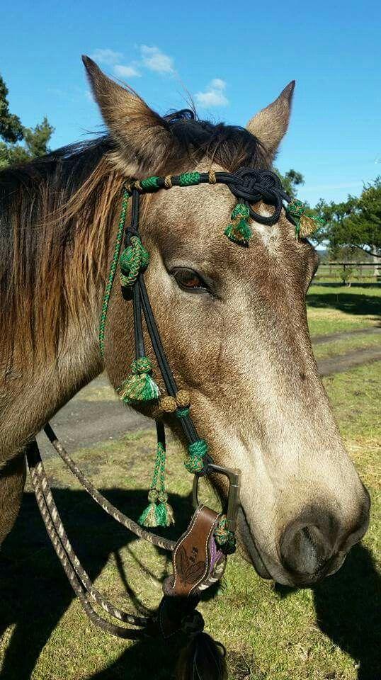 Paracord horse browband