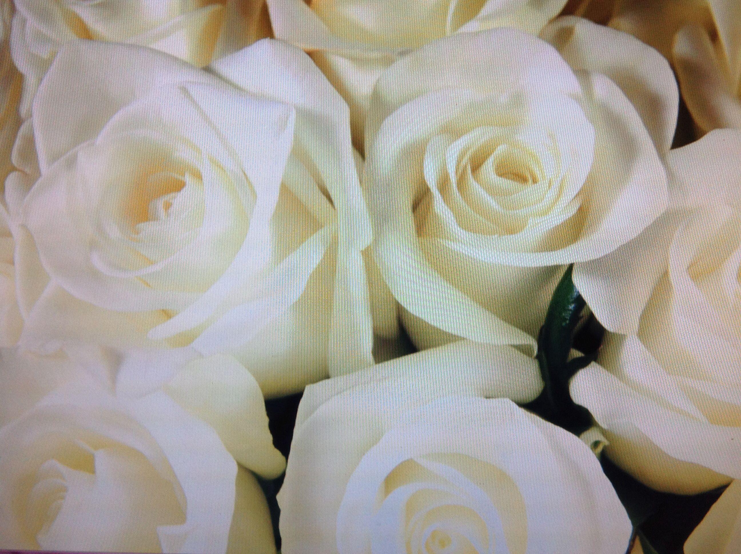 Love white Roses.