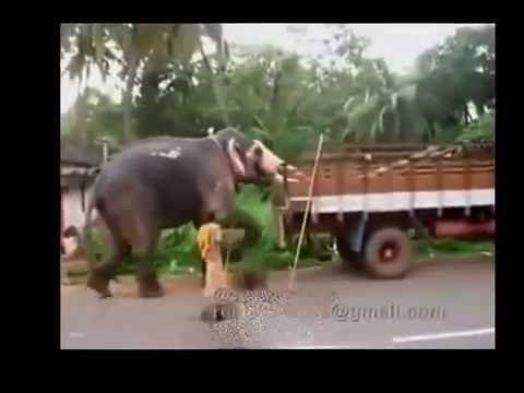 Videos For Fun: WhatsApp funny Videos Try not to grin or Laugh Fun...