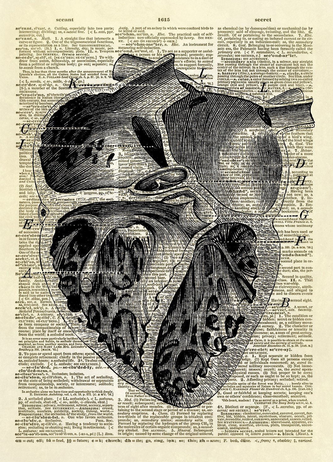 Human Heart Chambers Diagram Dictionary Art Print Arte Pinterest Anatomy And On