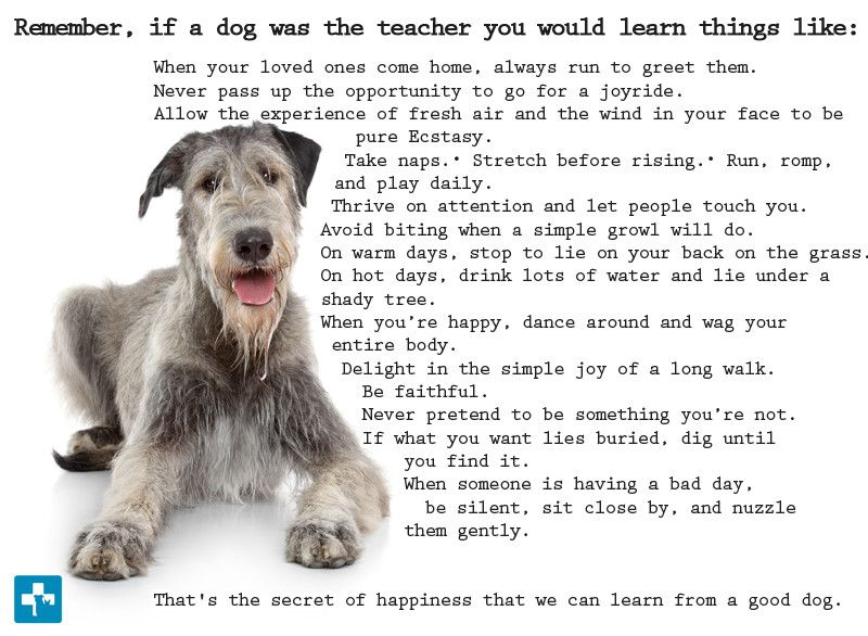 Why Dogs Live Less Than Humans Amazing Analogy Dogs Dog Quotes Animal Quotes