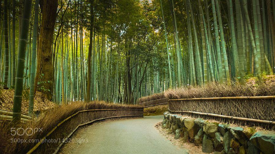 Popular on 500px : Arashiyama by hagakure82