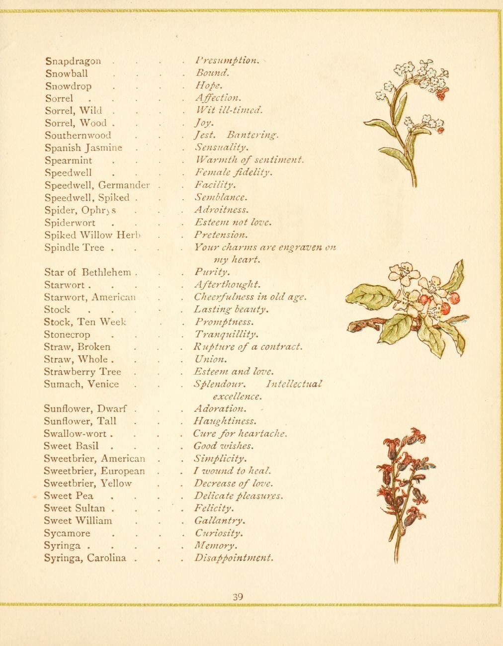 Language Of Flowers Language Of Flowers Flower Meanings Flower Chart