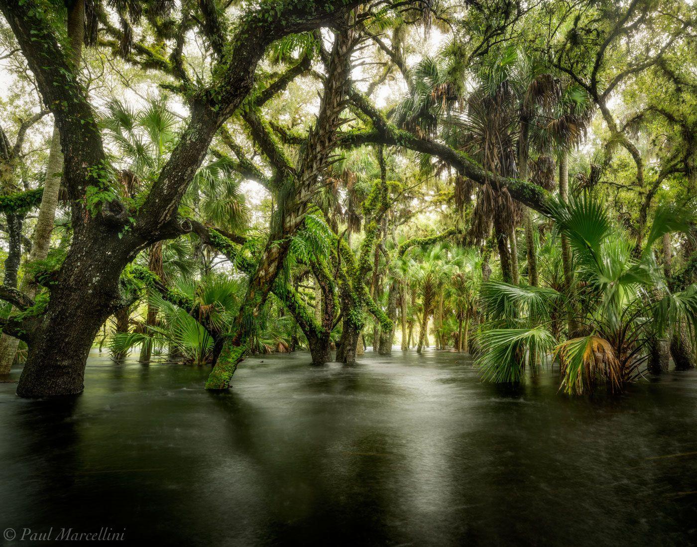 Beauty of Myakka River State Park floridatreasures