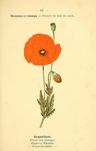 N134 W1150 In 2020 Botanical Illustration Spirit Drawing