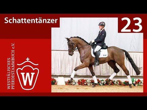 23 Schattentänzer  Wallach v. Schwarzgold/T. -  Lord Loxley - YouTube