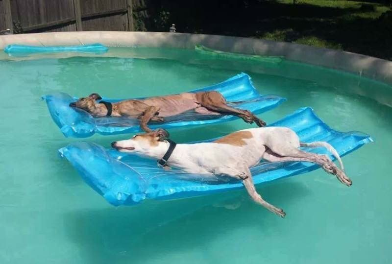 Dog lying on rafts in a pool pets cute dogs cute animals