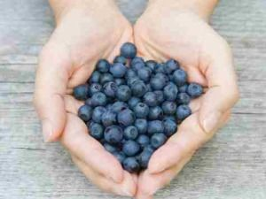 blueberries4