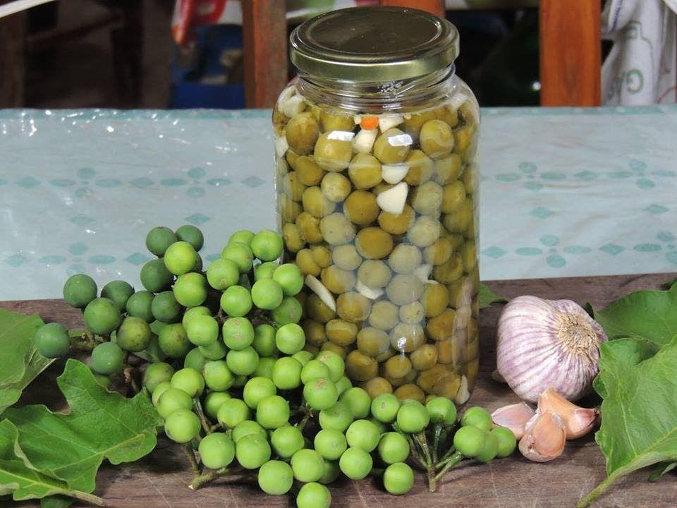 CONSERVA DE JURUBEBA | Receitas de conservas, Dicas de saúde, Chips de  batata doce