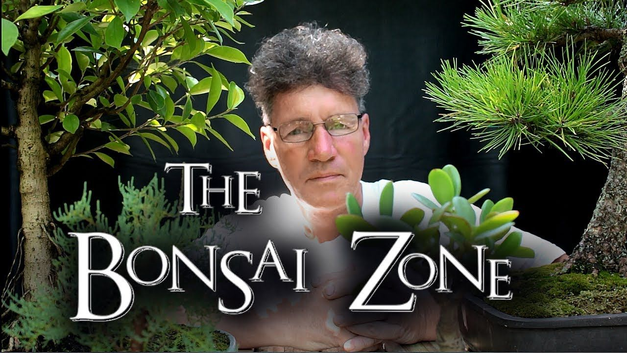 The Bonsai Zone Early Work On My Show Trees Part 2 July 2017 Youtube Bonsai Pine Bonsai Tree