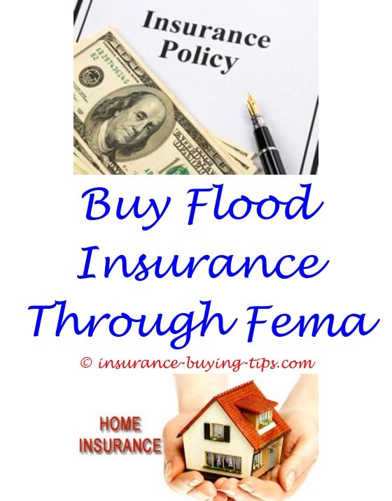 Fema Flood Insurance Quote 1 Year Car Insurance Quote  Dental Insurance Term Life Insurance