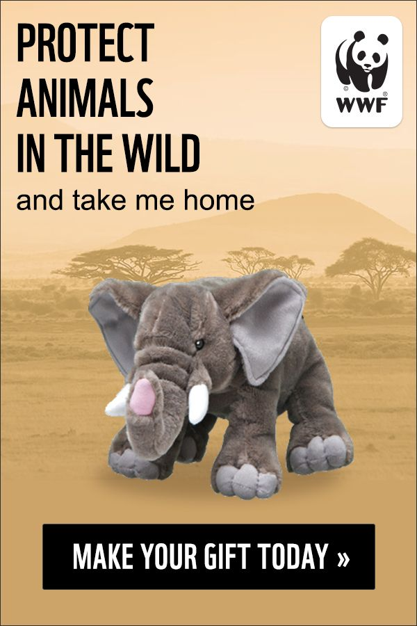 Protect wildlife with a symbolic adoption your donation helps wwf your donation helps wwf continue their critical work around the world plus you get a soft stuffed animal adoption kit for yourself or your solutioingenieria Image collections
