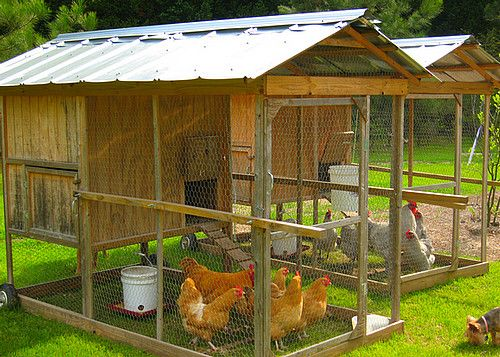chicken coop ideas designs and layouts for your backyard chickens - Chicken Coop Ideas Design