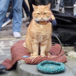 cat bob london  pesquisa google funnycat  street cat
