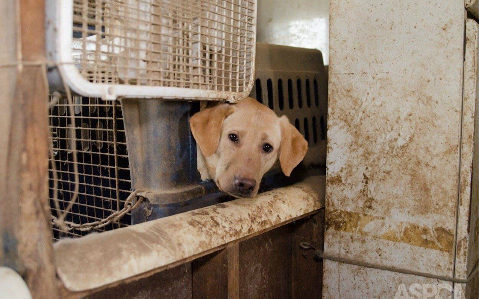 It S Puppy Mill Awareness Month Here Are A Few Ways You Can Help Stop The Cruelty In 2020 Hering