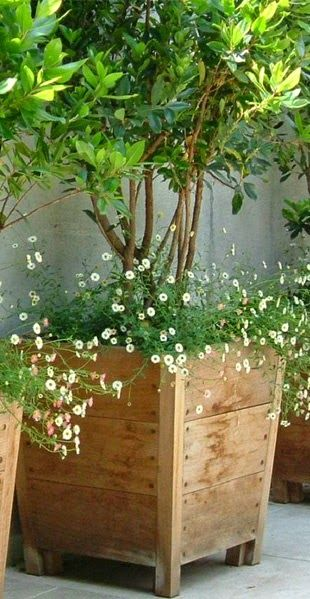 Pallet Shelves For Plants