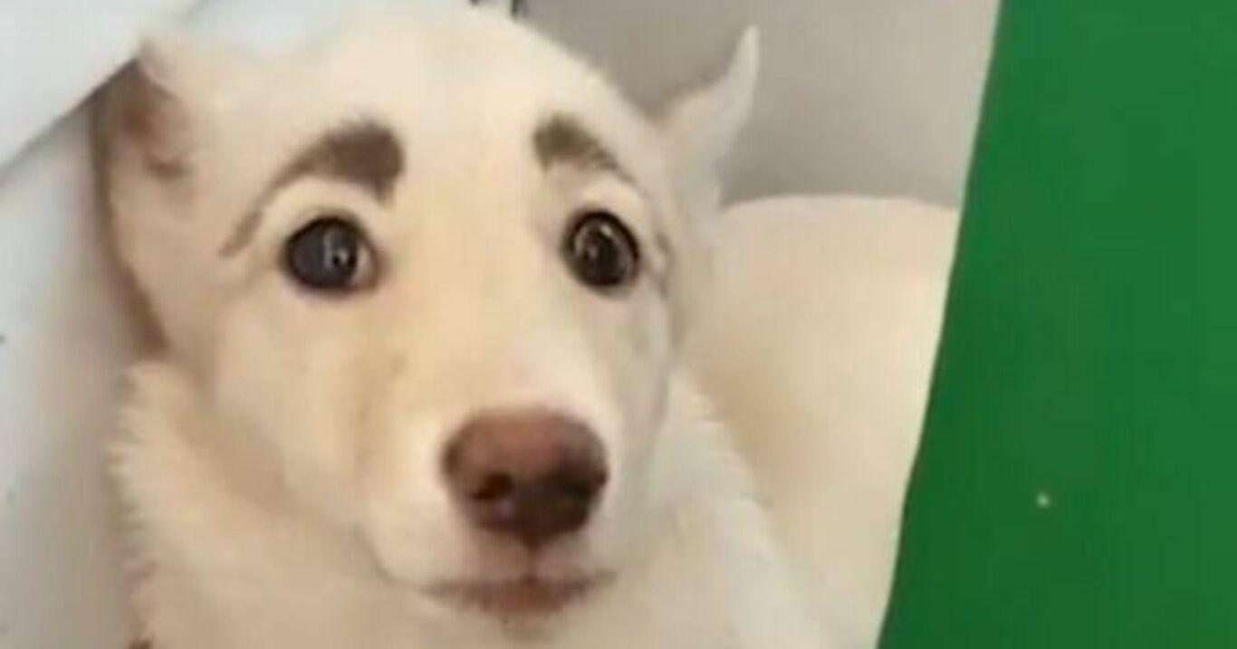 Las Cejas De Esta Perrita Son Como Las De Frida Kahlo Perros Refugio De Animales Frida Kahlo