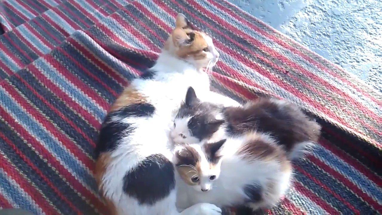 Кошка Аська, её детки, и собачка Злата радуется ими ...