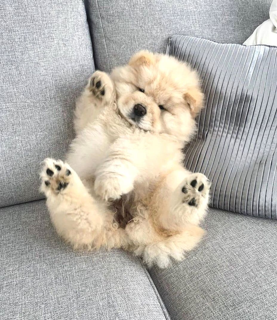 Hey All Just Dropping By To Say Hi Puppies Adorable