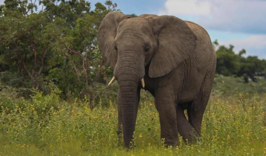 Pin By Jared Schnabl On Elephant African Animal Wild An Essay