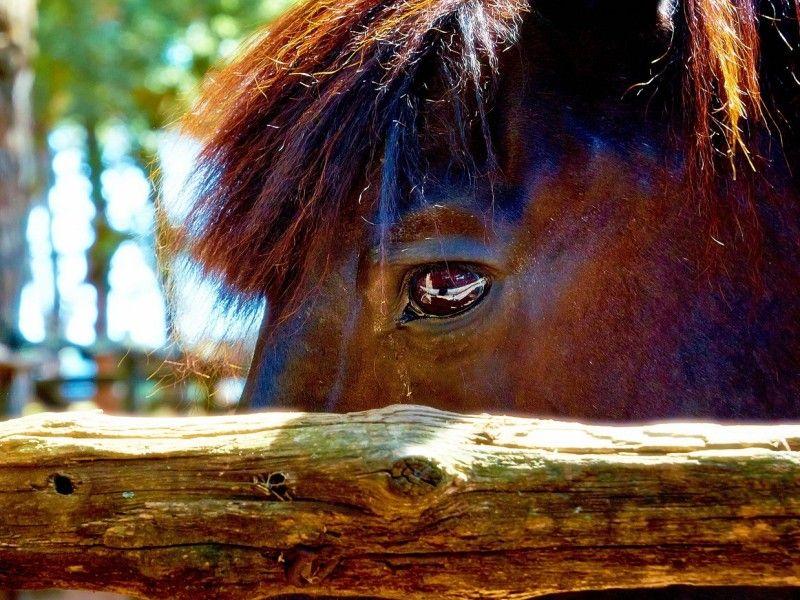 Les Fonds D Ecran L Oeil D Un Cheval Photos De Chevaux Cheval Images