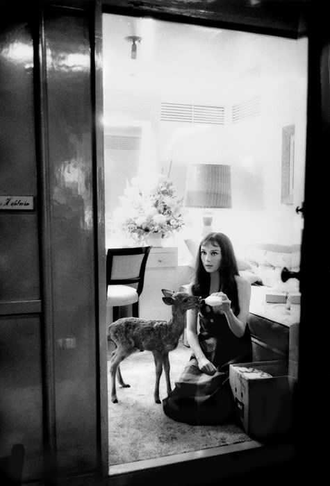 Audrey Hepburn and her fawn Pippen.