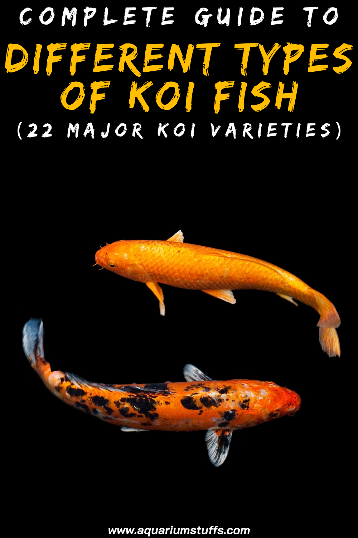 Complete Guide To Different Types Of Koi Fish 22 Major Koi Varieties In 2020 Koi Koi Fish Goldfish Pond