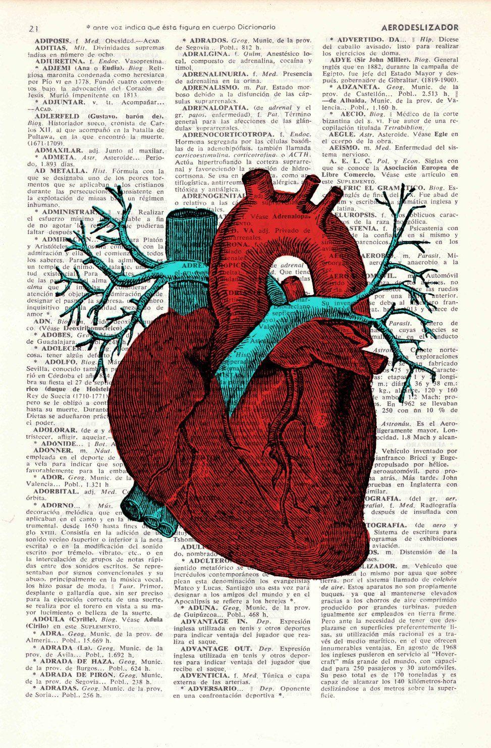 Human Heart Wall Art Anatomy Study Printmedicine Art Print