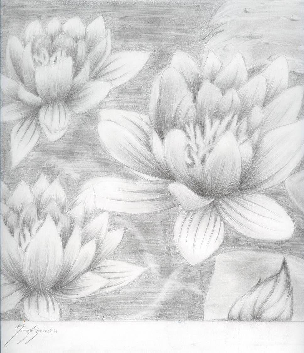 Lotusflowerssketchbyvamp666akuma d3b58p3g 9681125 art lotusflowerssketchbyvamp666akuma d3b58p3g 9681125 izmirmasajfo
