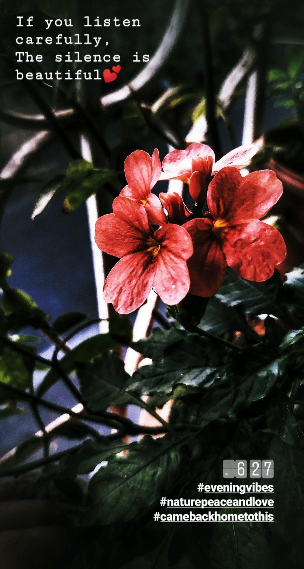 Aboli name of the flower in Marathi language. Aboli