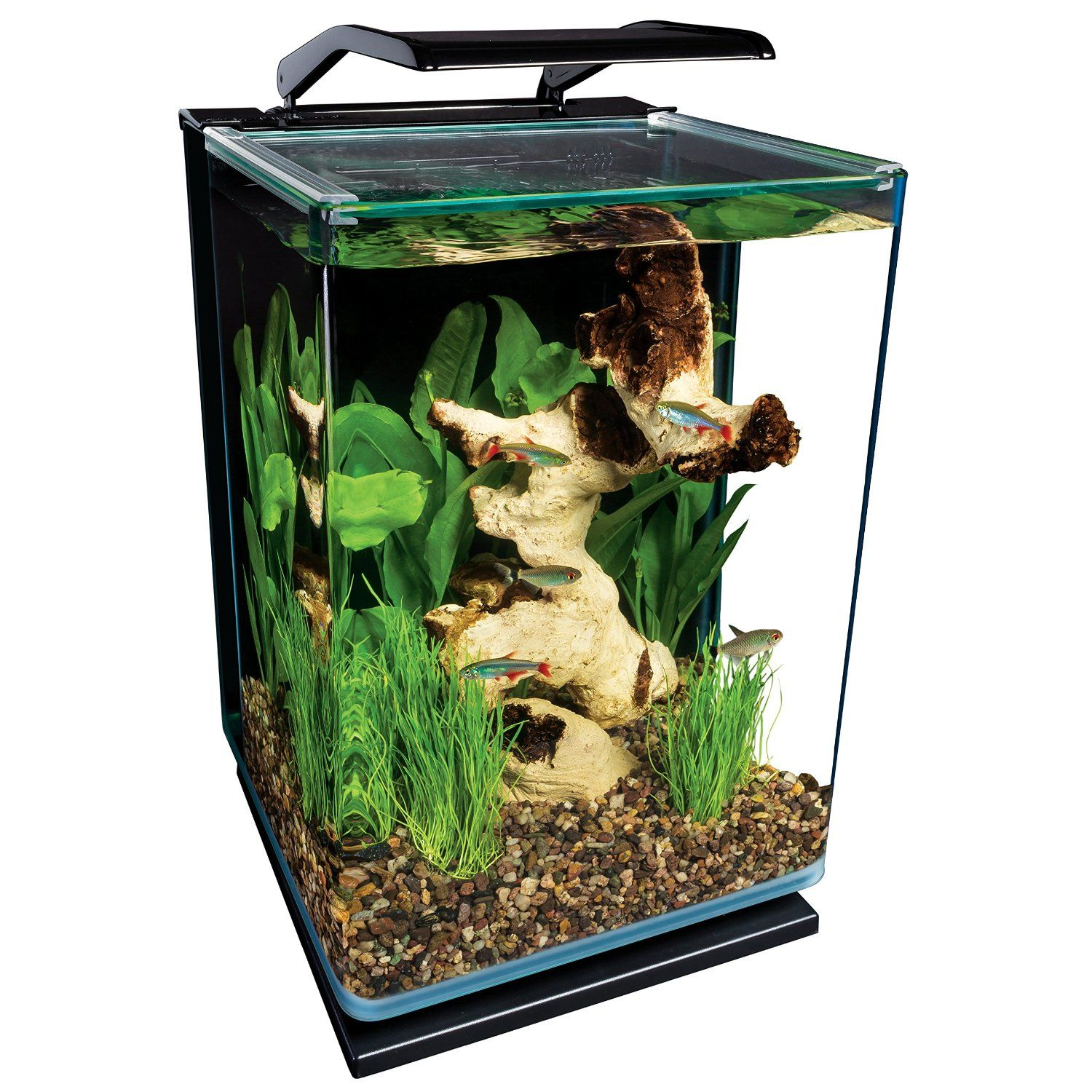 Because Of That Your Optimum Fish Tank Should Be Large Enough To Keep The Fish Healthy Best Betta Fish Tank You Glass Fish Tanks Aquarium Kit Betta Fish Tank