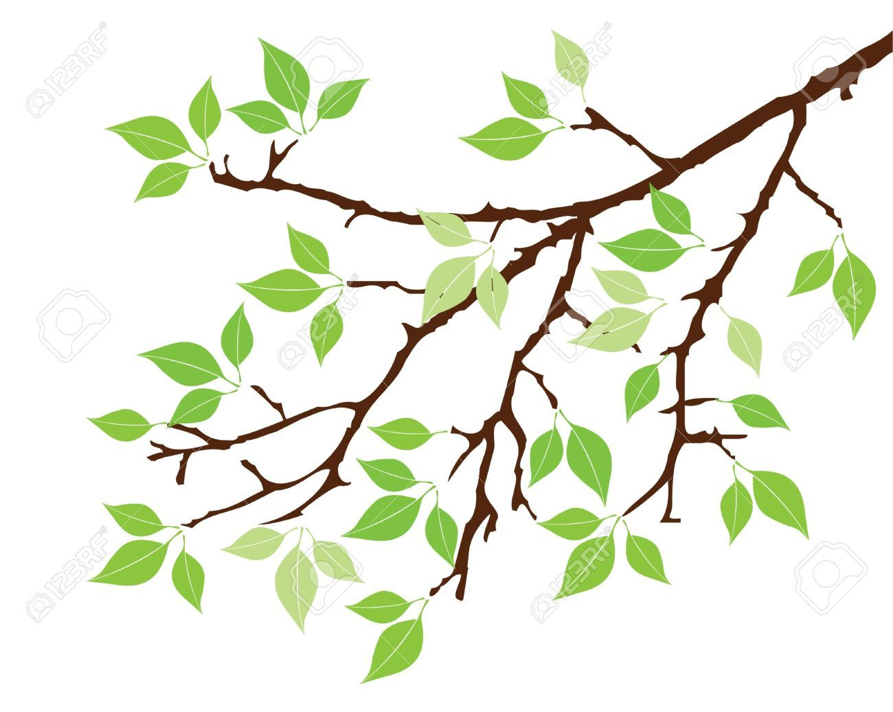 Vector Tree Branch With Leaves Royalty Free Cliparts ...