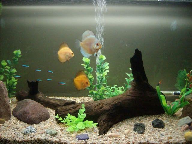 Plantas artificiales para acuarios de agua fria acuarios for Cuidados acuario agua fria