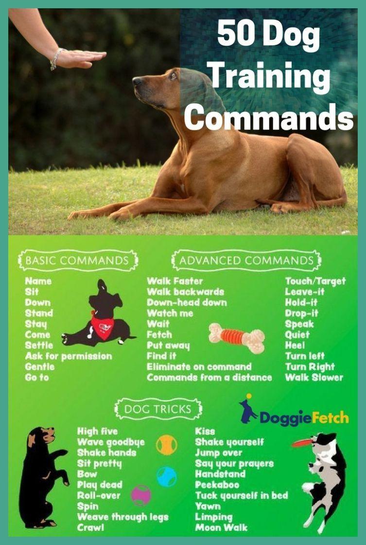 Dog sitting tips how to choose a good dog sitter dog